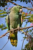picture of rainforest  - Portrait of green parrot sitting on branch in the amazon rainforest - JPG
