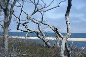 foto of martha  - Chappaquiddick beach with trees in the foreground in Massachusetts - JPG