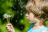 image of blowing  - Kid blowing dandelion outdoor on sky background - JPG