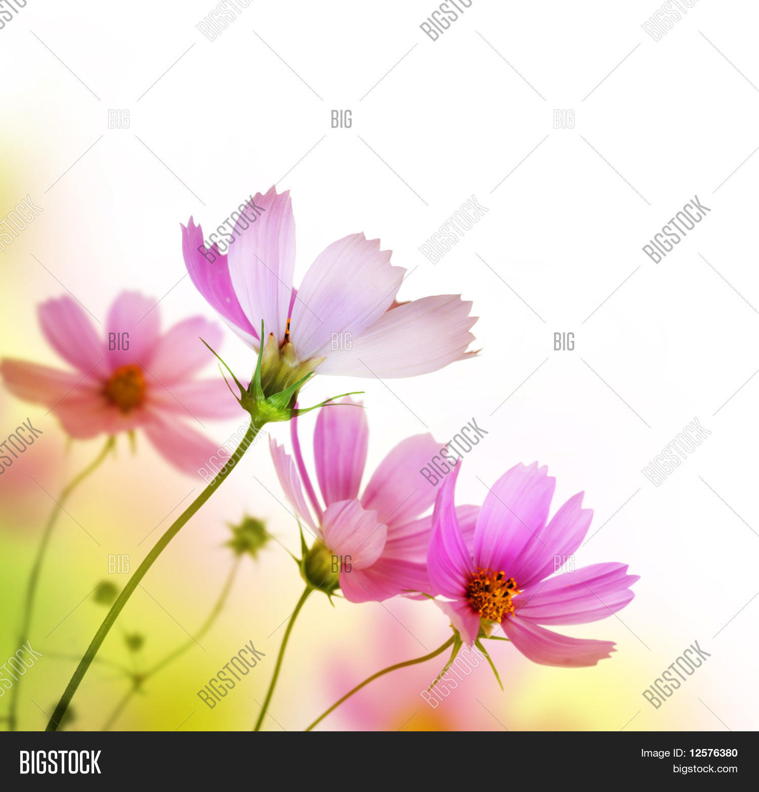 Beautiful floral border flower image photo bigstock - Photo image design ...