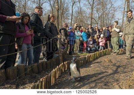 Penguin Walk In The Zoo