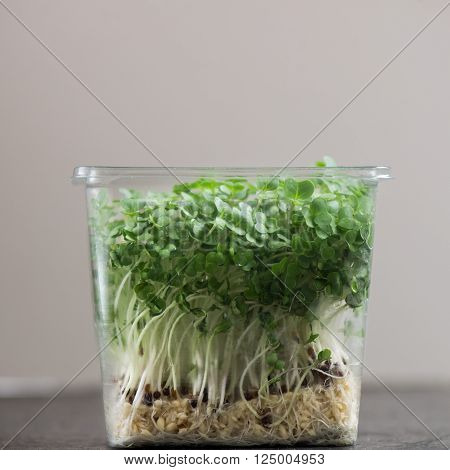 Fresh Cress Salad On Plastic Container