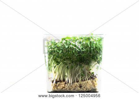Fresh Cress Salad Macro Shot Selective Focus Shallow DOF