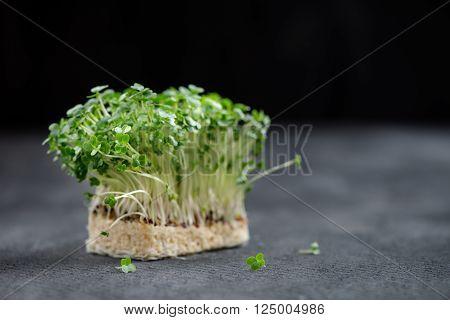 Fresh Cress Salad Macro Shot Selective Focus, Shallow Dof