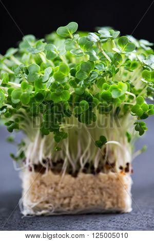 Fresh Cress Salad Macro Shot