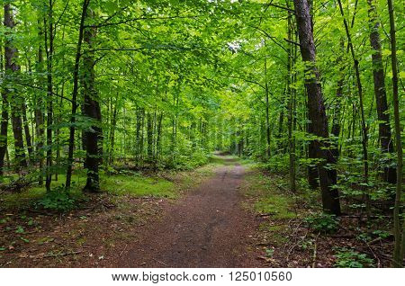 Path Through Green Forest