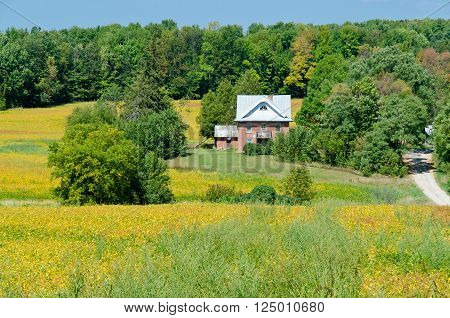 Plant of soybeans and house in sunlit under blue sky