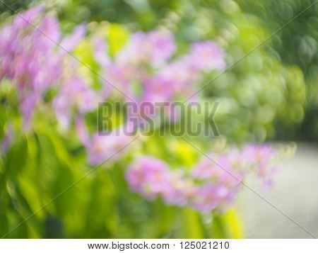 Swirly bokeh abstract blurred nature tree background violet flower and green leaves
