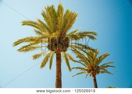 Palm trees along the coast in Port of Soller at beautiful sunny day. Image of tropical vacation and sunny happiness. Filtered vintage photo.