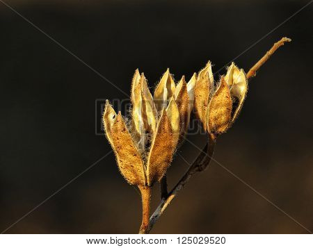 Dry orange plant with black background. Orange color of plant is very contrasty with black background.