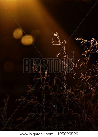 Sun rays or gog rays falling on berry plant leaves. Lens flare in dark portiin of photo gives a very beautiful look. Berry plant branch lighten by god rays is looking artistic.