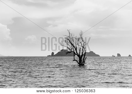 A tree growing in the sea of Thailand. Cloudy sky and rocks