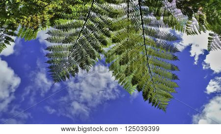 Under the ferns and blue sky in New Zealand