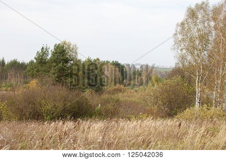 Autumn Landscape. Park in Autumn. Landscape with the autumn forest. Early Autumn