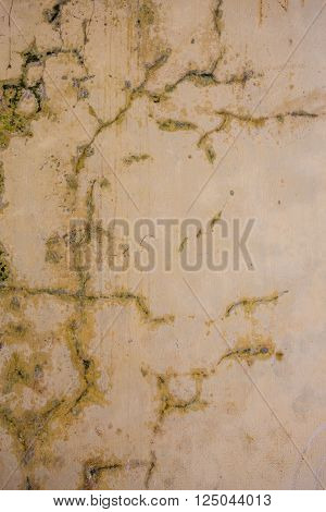 Closeup to cracks and mould on an old wall in a building