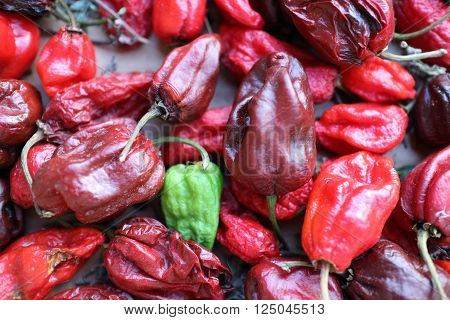 Habanero chilly pepper the most spicy chilly pepper in the world