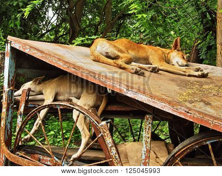 Two street dogs are sleeping on rusty broken bench.