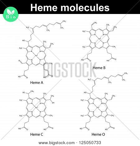 Heme molecule - structural chemical formulas of a b c and o types 2d vector illustration eps 8