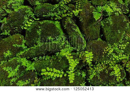 Stone Wall With Greenery. Nature Texture