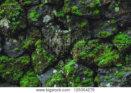 Stone wall with greenery. Nature Texture .
