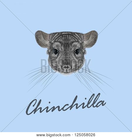 Cute fluffy face of Chinchilla on blue background.