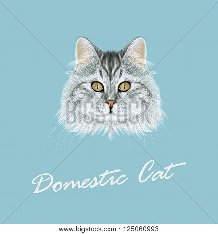 Cute face of grey tabby cat on blue background.