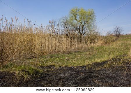 Scorched grass meadow as a background and texture