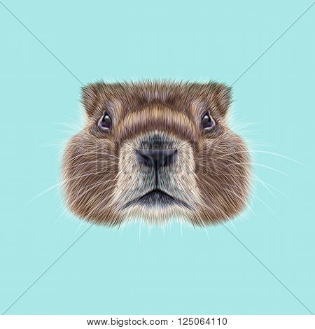 Cute face of meadow Rodentia animal on blue background.