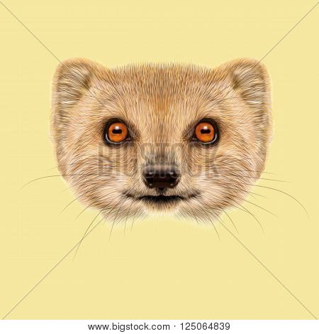 Cute face of gold Mongoose with orange eyes on yellow background.
