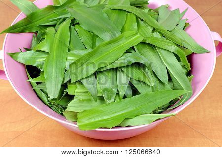 Leaves of wild garlic (Allium ursinum) in a pink plastic bowl on wooden table