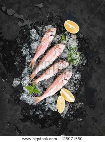 Raw Red Mullet fish with lemon, mint and rosemary on chipped ice over dark stone backdrop, top view
