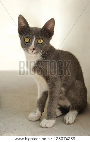 Gray cat young in front nature background be irresolute