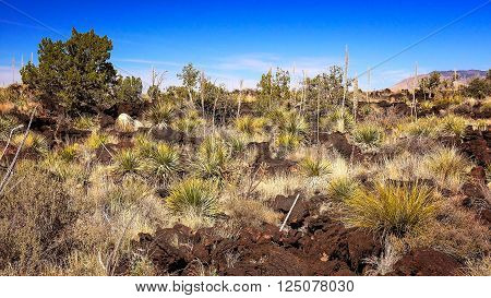 Lush lava landscape at Valley of Fires Recreation Area in New Mexico