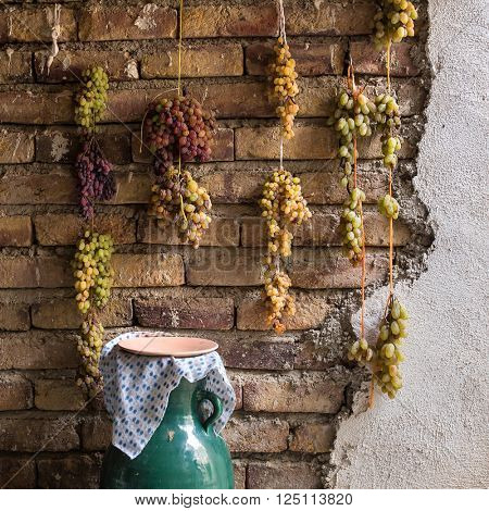 Grapes drying on the wall. Traditional way to make raisins in Iran.
