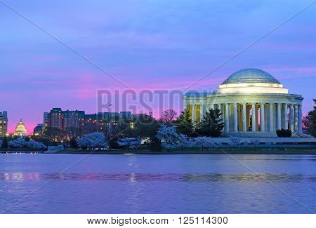 Thomas Jefferson Memorial and US Capitol at dawn during cherry blossom festival. Pink dawn sky colors during cherry blossom festival in Washington DC.