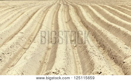 photographed close up furrows in a potato field. Spring