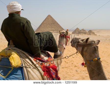 Camel Riding Near Pyramids