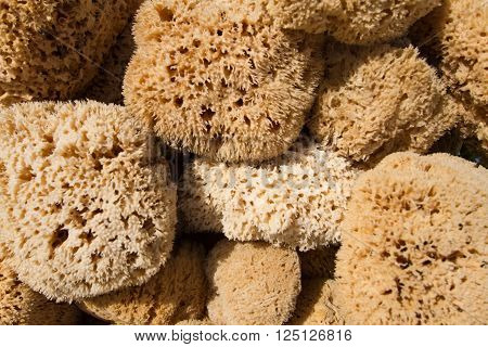 Freshly caught natural sponges (natural animal beauty / toiletry product from the sea)