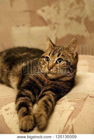 Portrait of young cat in beige tones
