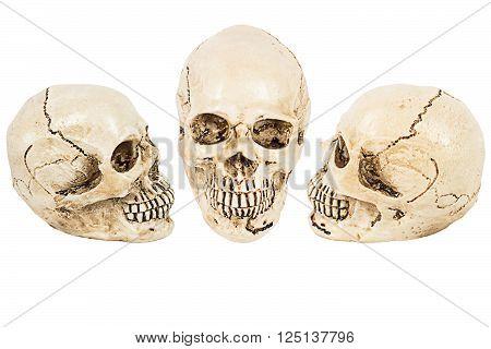 white skull of human on white background