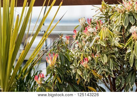 Potted bushes with pink and white flowers next to the railing on a dock at a marina