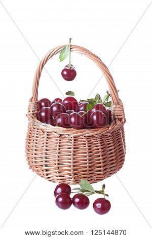 wattled basket filled with ripe cherries it is isolated a white background