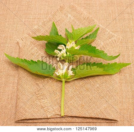 Fresh Green Nettle On Background Canvas