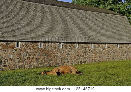 A brown horse is sleeping in front of a huge brick hip roofed barn.