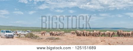 ADDO, SOUTH AFRICA - FEBRUARY 24, 2016: Unidentified tourists in vehicles viewing a large herd of elephants waiting in small family groups to drink water at Hapoor Dam