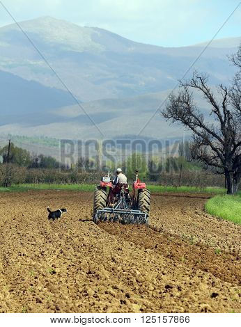 barking dog and  man in tractor plowing field in spring