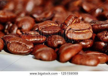 Coffee Sugar and Cocoa Exchange, fabric effect, Arabia, Aroma, Seed