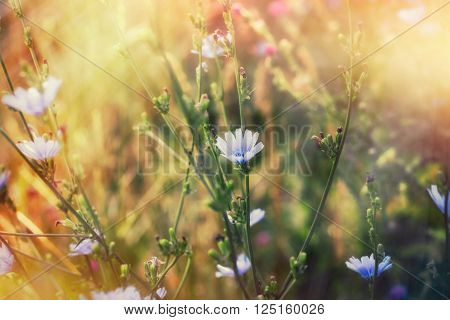 Blue flower in meadow lit by spring sunlight - sun rays