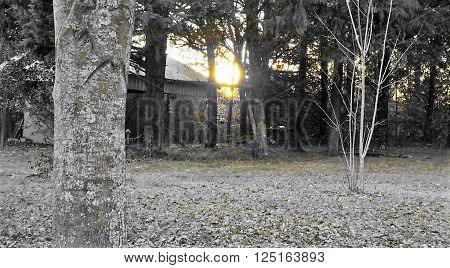 Country Morning at Sunrise Behind the Barn !