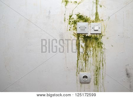 Green mold on white wall with switch sockets and power plug ** Note: Soft Focus at 100%, best at smaller sizes
